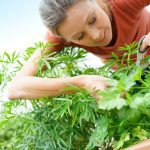 3 Delicious Herbs To Boost Your Bone Health